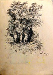Четыре дерева. 1909. Лист из походного альбома Я.Я. Зальцмана. Тушь, перо.