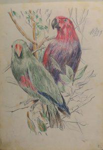 Попугаи. Из походного альбома Я.Я. Зальцмана. 1899. Пастель.